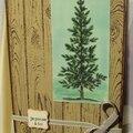 carte fond bois et arbre