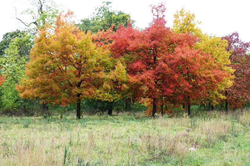 Novembre en couleur