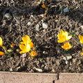 V'là le printemps !!