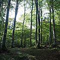 Terrains de chasse (2)