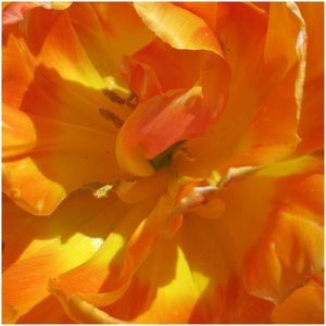 Les Jardins de Claude Monet (3)