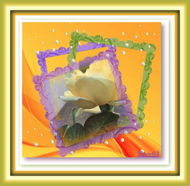 Une rose de mon jardin Rose63