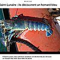 Les caphys en pincent pour le homard