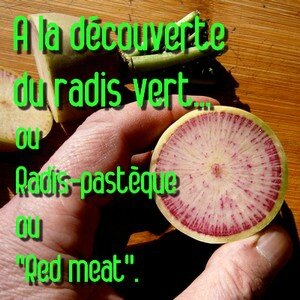 A la découverte du red meat radis pastèque in natures paul keirn 2015
