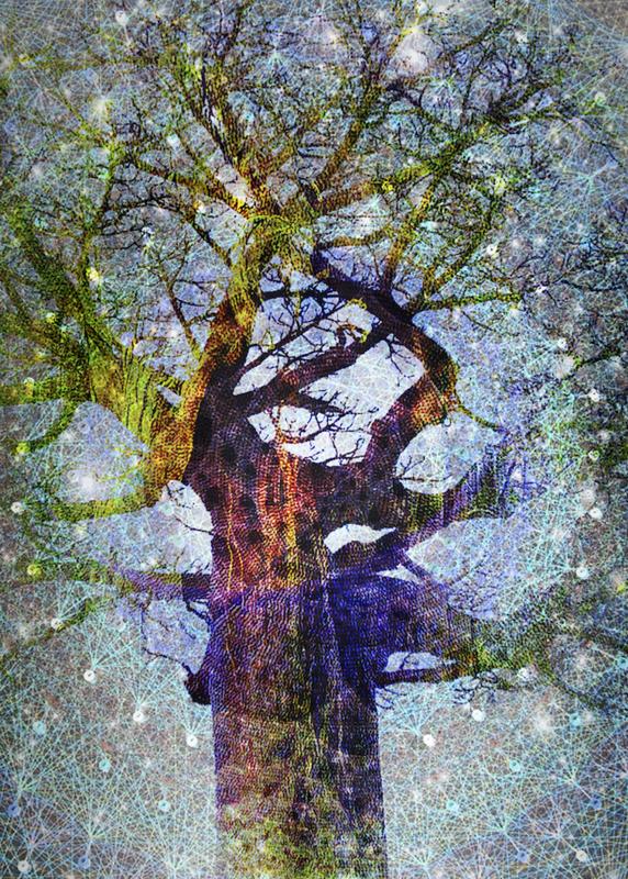 arbre arc-en-ciel
