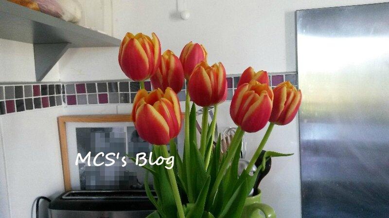 tulipe anniversaire