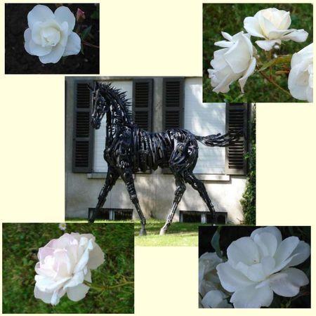 roses blanches et sculpture noire, ave.roosevelt