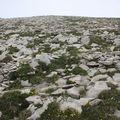 2009 06 29 Proche du sommet culminant du Grand Veymont, environ 1350 mètres d'altitdue