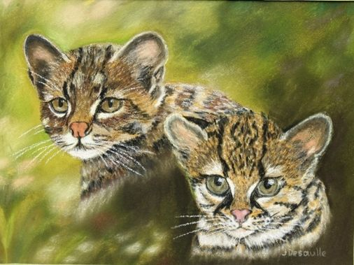 oncille et marguay (chats sauvages)