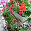 terrasses et balcons fleuris