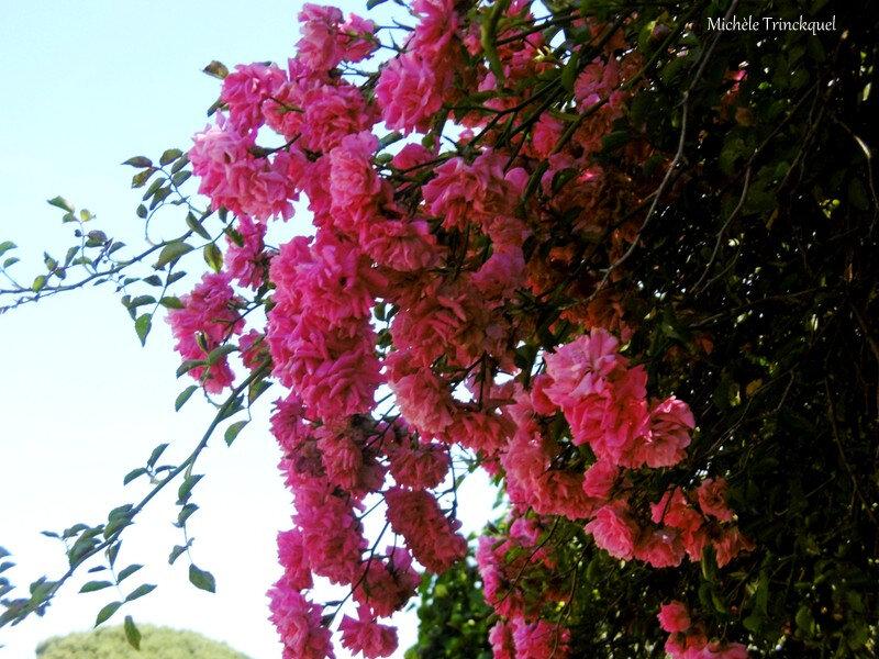 1-Fleurs de Léon 160619