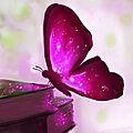 Papillon des mots