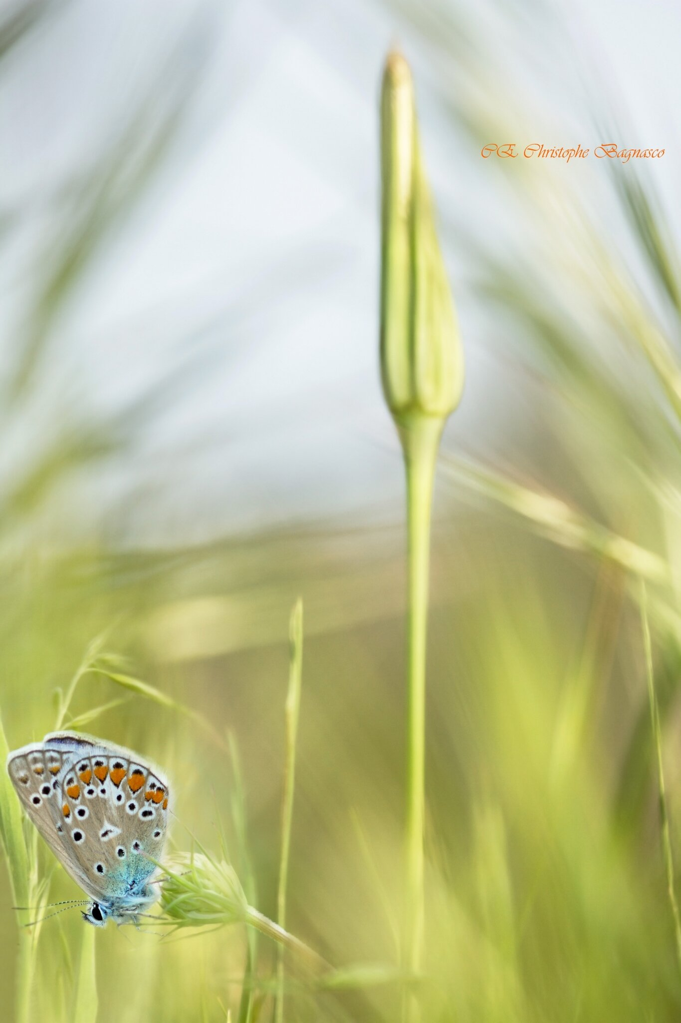 Fondu d'herbes et de couleurs