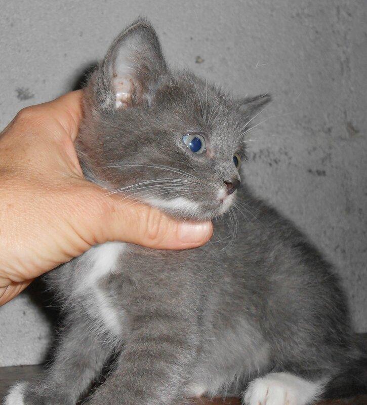 mâle gris 1_3