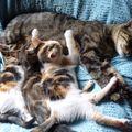 2009 10 05 Les chatons qui tètent
