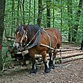 IMG_1813 a