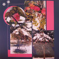 le rosier sous la neige