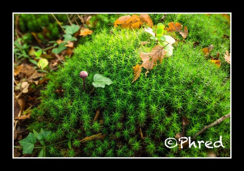 Peujard FDP ©Phred-5