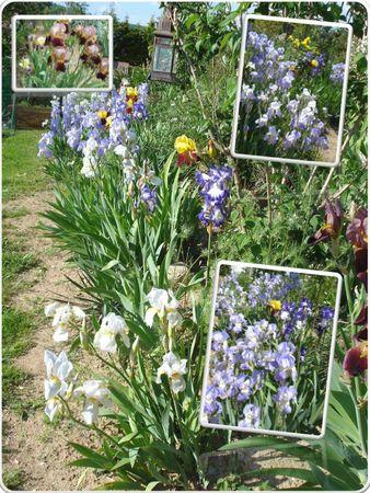 Fleurs 2009-2010 (24)