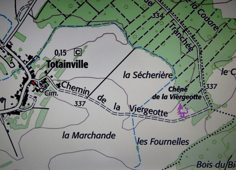 9N3A2141 chêne Totainville