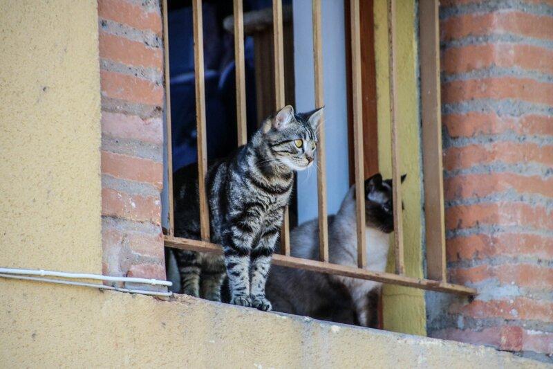 Chats à une fenêtre