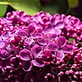 Le jardin botanique jm pelt se met aux couleurs de l'ecole de nancy