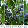 Quartier drouot jardin - queues de prunes...