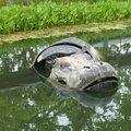 LR hippopotame