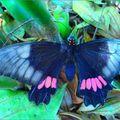 Butterfly (108)