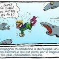 insolites_05_requins_web