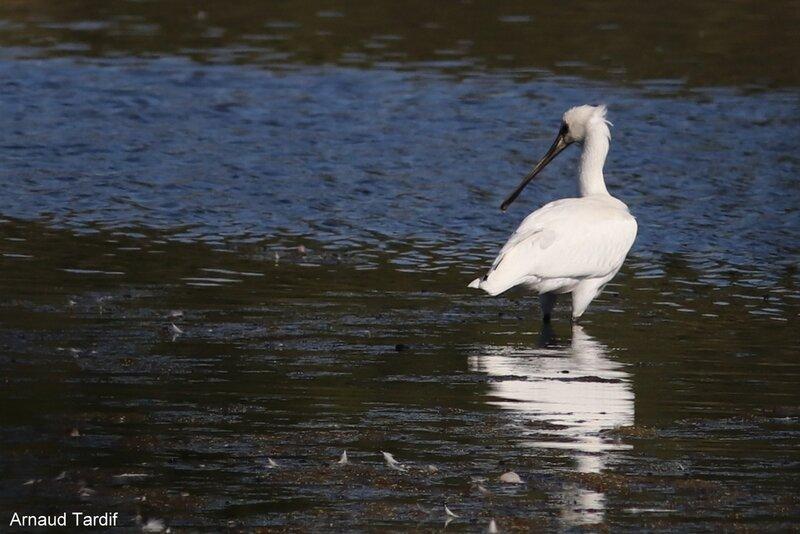 001692 Larmor-Baden - Le Golfe du Morbihan - L'étang de Kercadoret à St Philibert