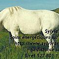 Comment éviter les coliques d'herbe chez les chevaux ?