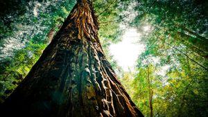 marrondroit-de-vert-de-tronc-d-arbre,1366x768,63542
