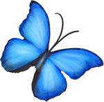papillon_9