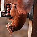 aviary-image-1516651762280
