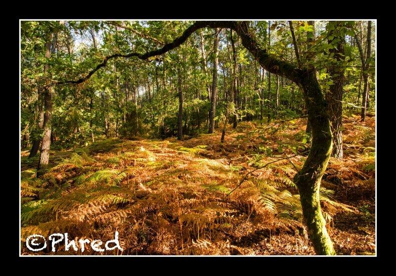 REFLETS ©Phred-11