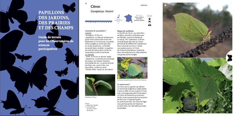 Guide-des-papillons-des- jardins