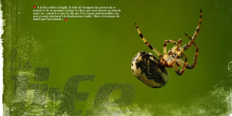 20180519 Spider B