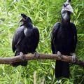 hugebird