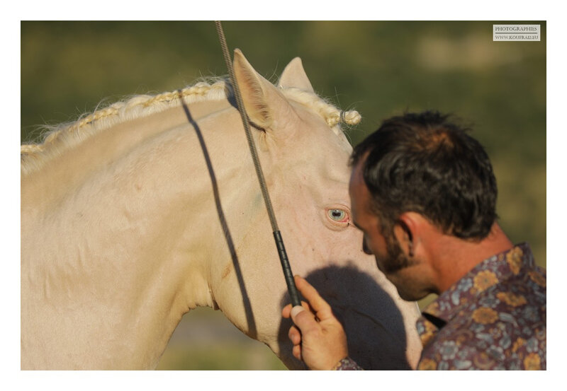hotos JMP©Koufra 12 - El Rancho - Le Mas de Sisco - 25082020 - 0379
