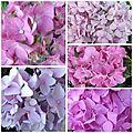 Fleurs du jardin (10)