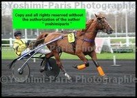 Master Grand National du Trot Paris-Turf 6 decembre 2015,heat Ulster Perrine,Franck Nivard,copie blog,©Yoshimi-Paris Photographie,I7D_6612 (2)