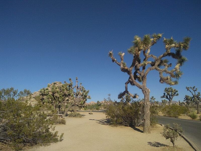 265 - Le desert de Joshua tree (1)