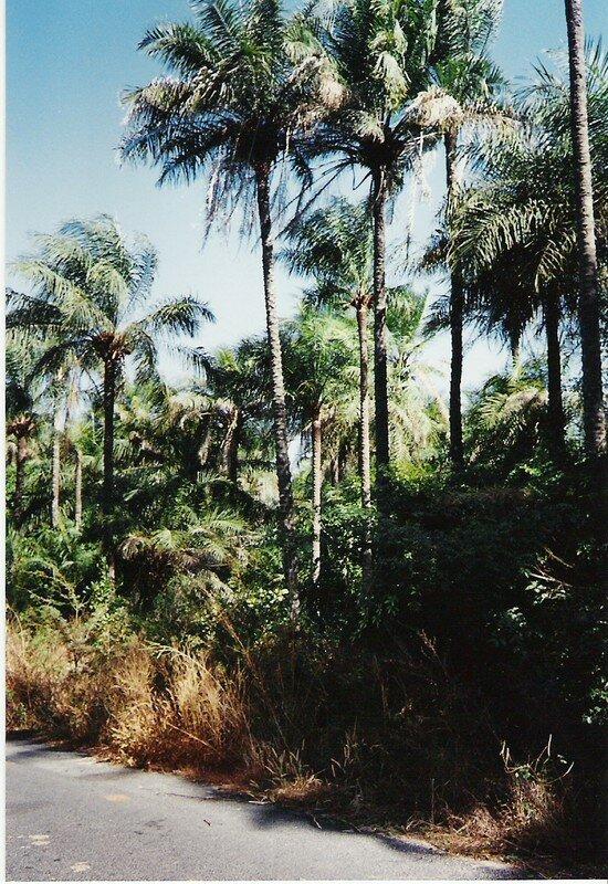 Casamance la Verte(1995)