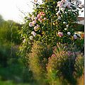 Windows-Live-Writer/Jardin_10232/DSCN0737_thumb