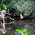 L'étang et le canard...
