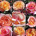 Quelques roses...