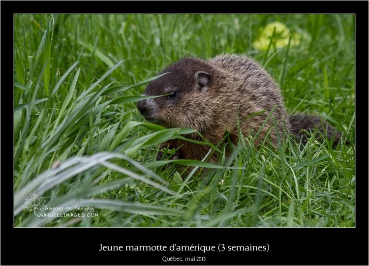 IMG_8204-naturelimages.com