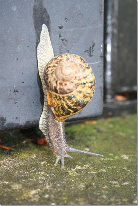 l'escargot-1