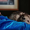 Les opossums qui font l'histoire 8